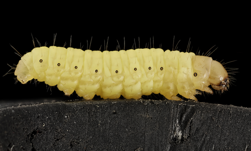 Could This Plastic Eating Worm Herald A Solution To Global Waste Problems?